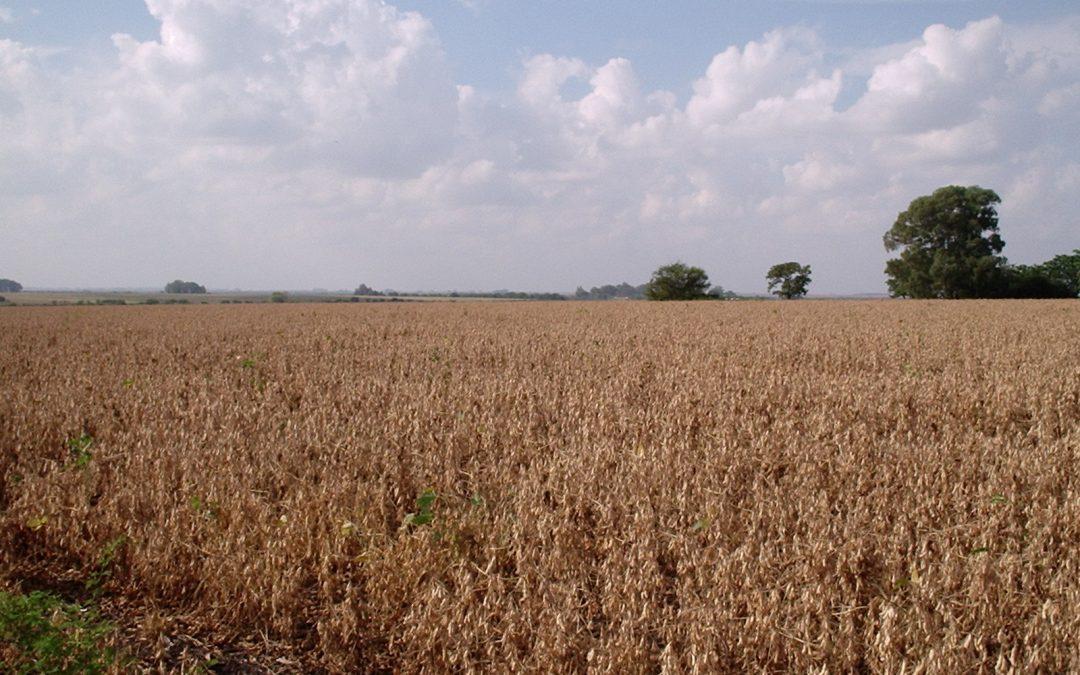 Campo 29 Ha. Agricultura