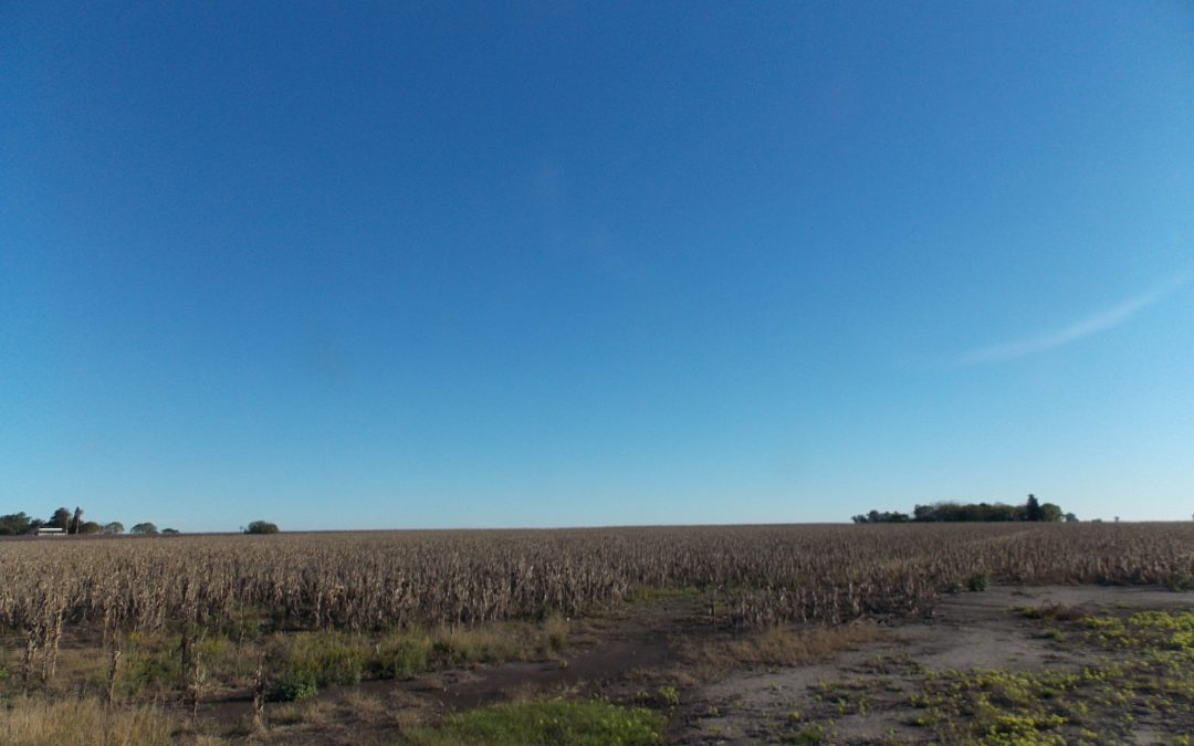 Campo 97Ha. «agricultura»