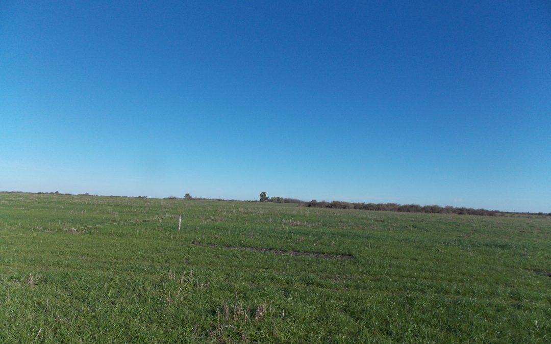 Campo 160Ha. «agricola»